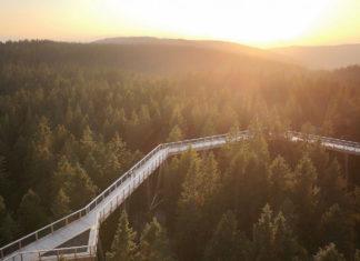 The Pohorje Treetop Walk, photo by UKOM