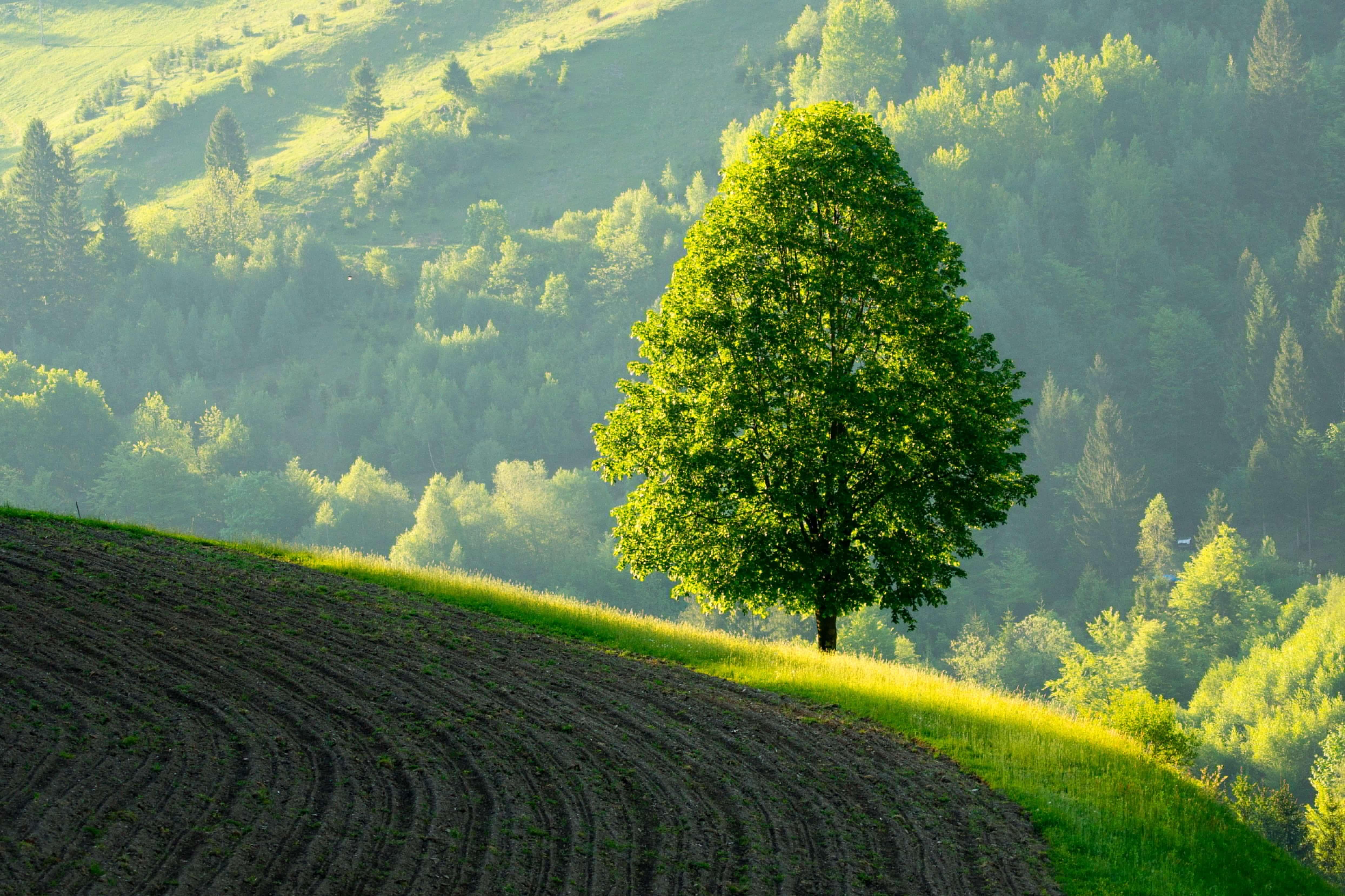 Linden Tree_Slovenia_Janez Tolar, www.slovenia.info